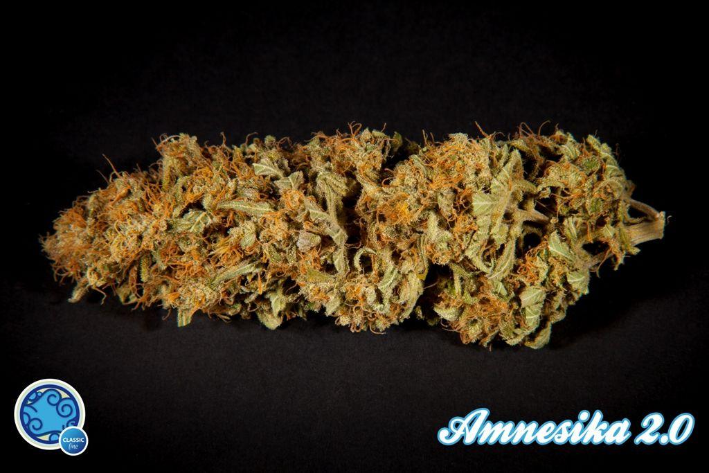 Amnesika 2.0 Feminised Seeds