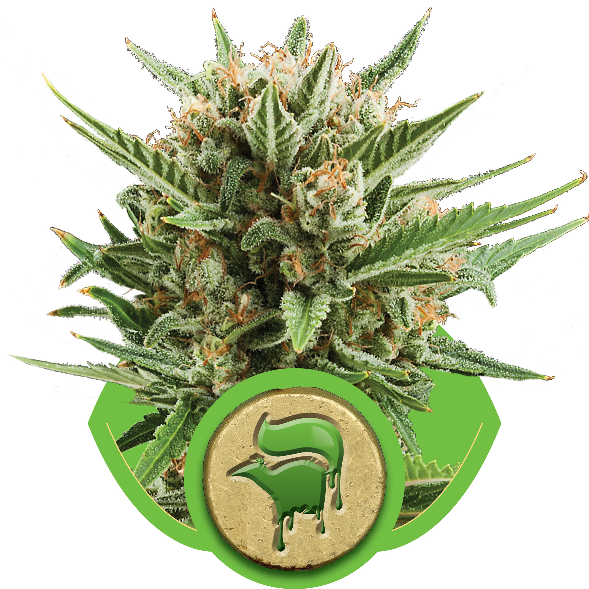 Sweet Skunk Auto Feminised Seeds