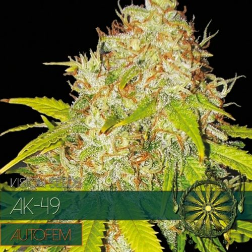 AK - 49 Auto Feminised Seeds
