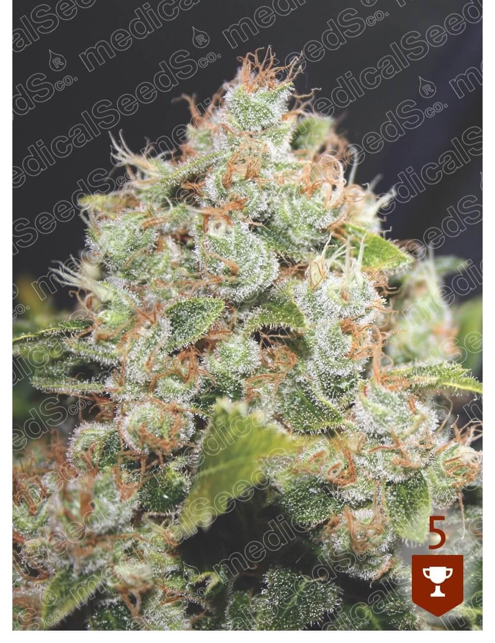 BCN Sour Diesel Feminised Seeds