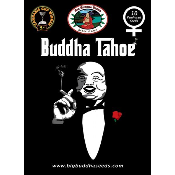 Buddha Tahoe Feminised Seeds