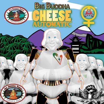 Big Buddha Cheese Auto Feminised Seeds