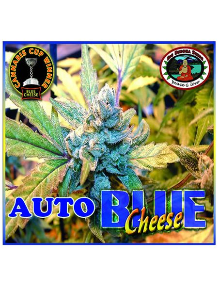 Blue Cheese Auto Feminised Seeds