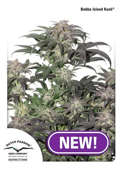 Bubba Island Kush Feminised Seeds
