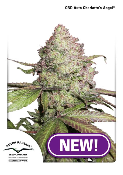 Charlotte's Angel CBD Auto Feminised Seeds