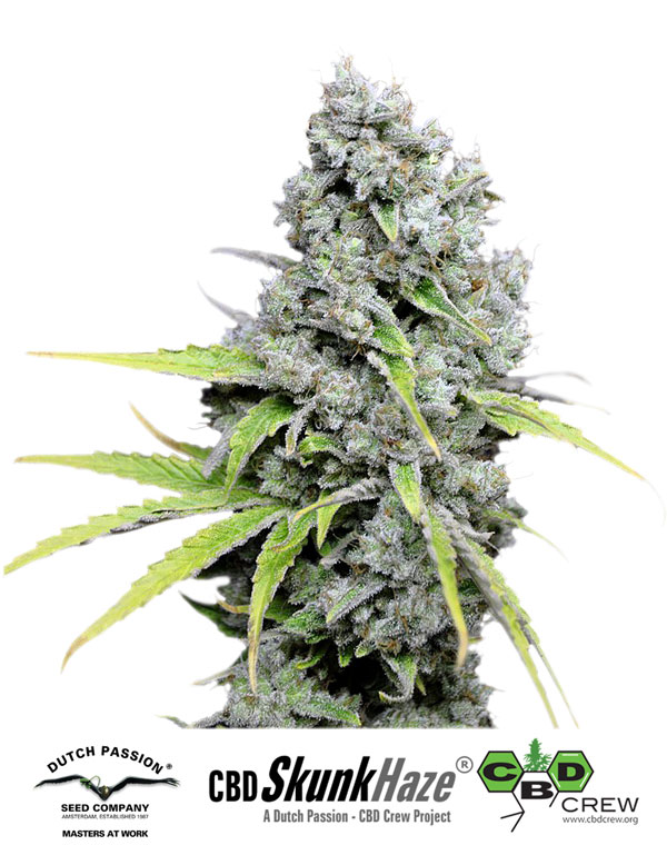 Skunk Haze CBD Feminised Seeds