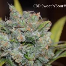 Sweet 'n Sour Widow CBD 1:1 Regular Seeds - Bulk x 100