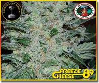 Freeze Cheese '89 Feminised Seeds