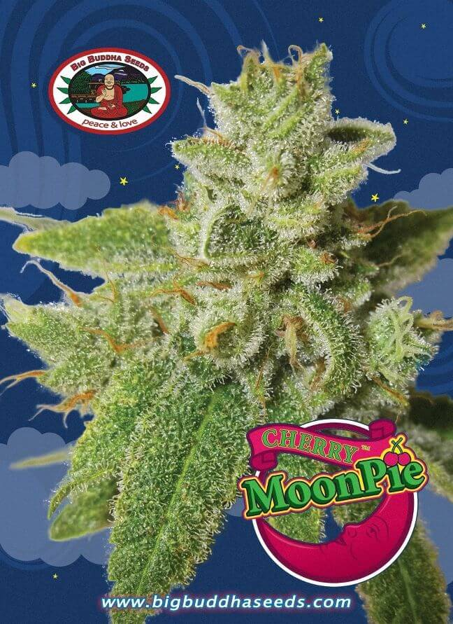 Cherry Moon Pie Feminised Seeds