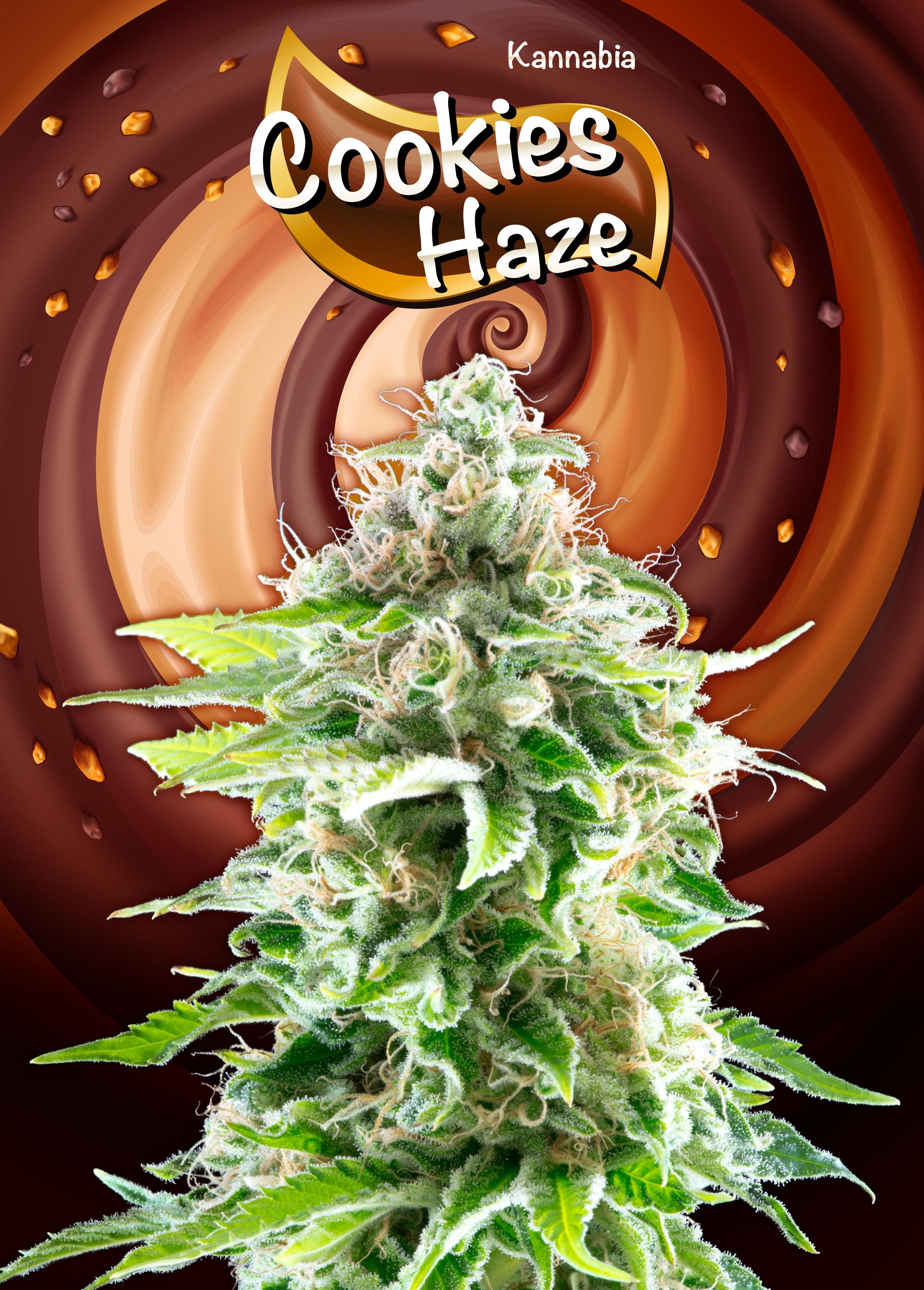 Cookies Haze Feminised Seeds