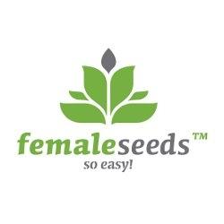 NL Auto Feminised Seeds