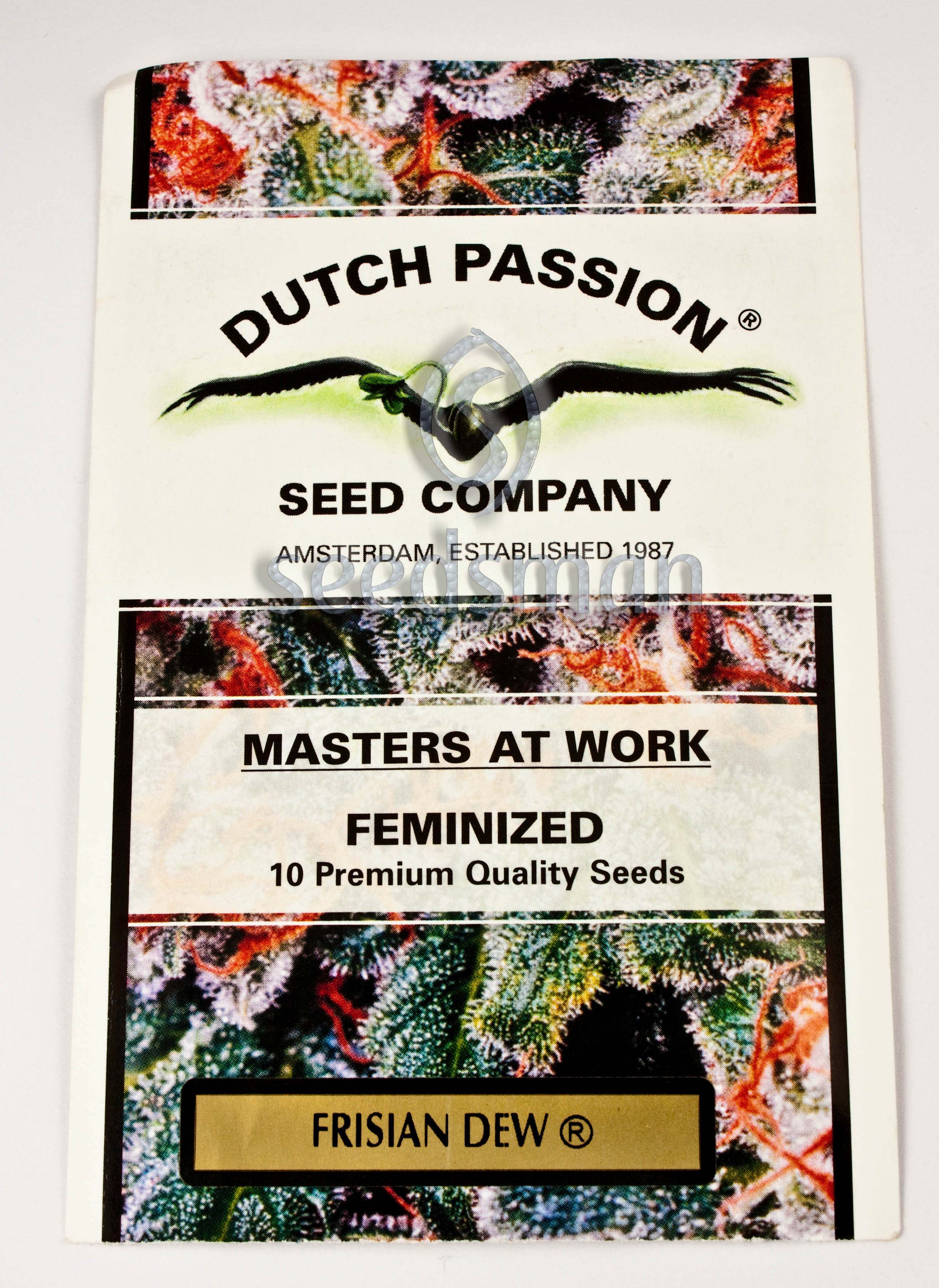 Frisian Dew Feminised Seeds