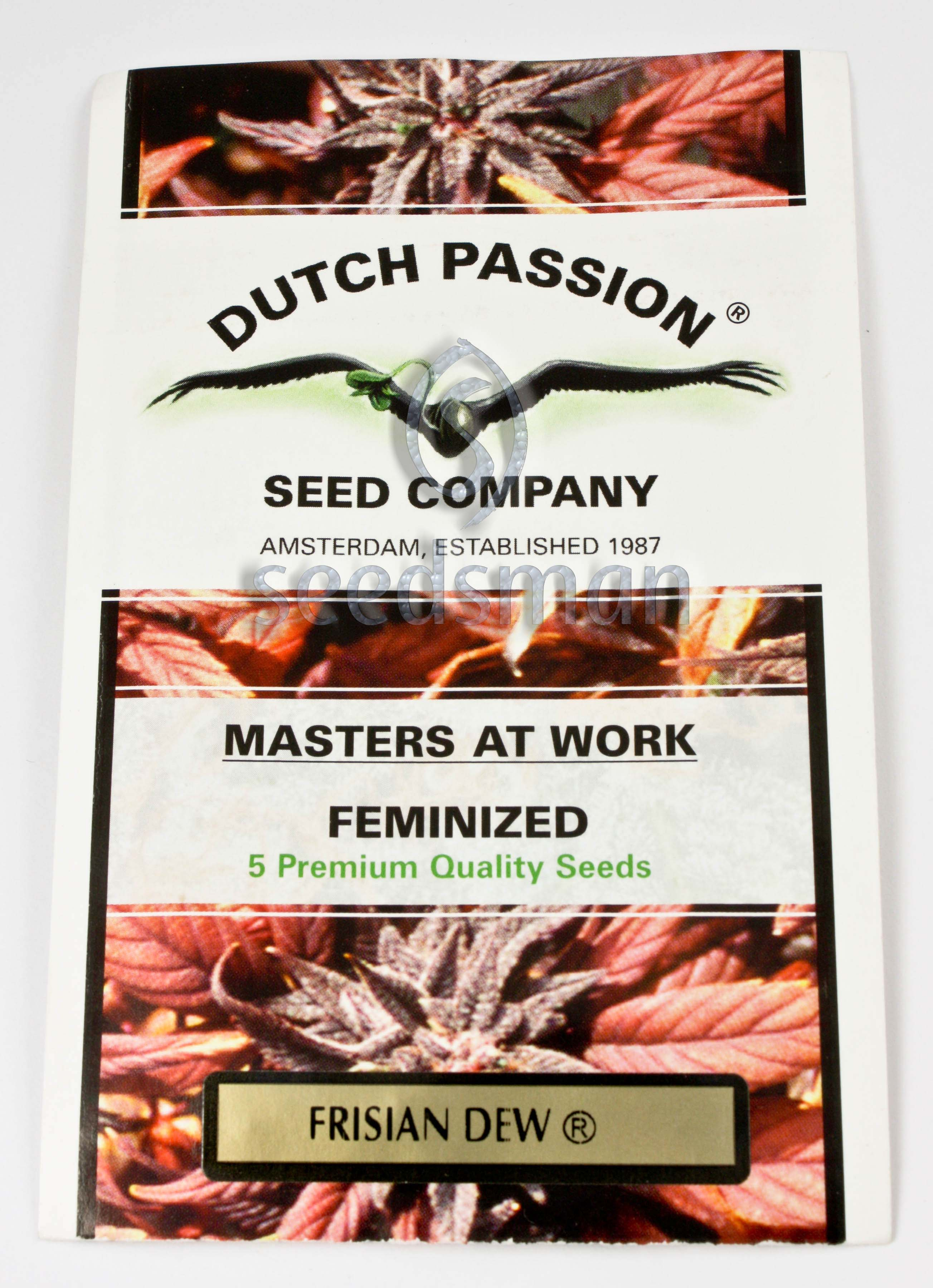 Frisian Dew Feminised Seeds