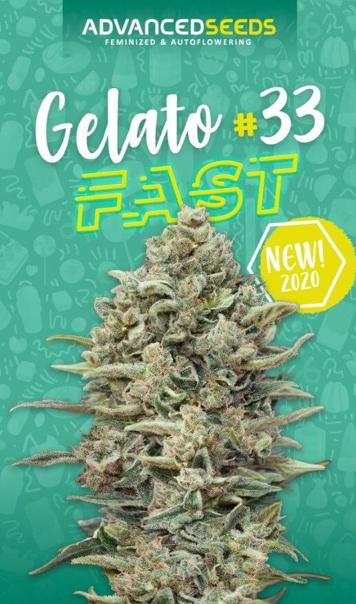 Gelato #33 FAST Feminised Seeds