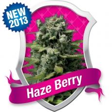 Haze Berry Feminised Seeds
