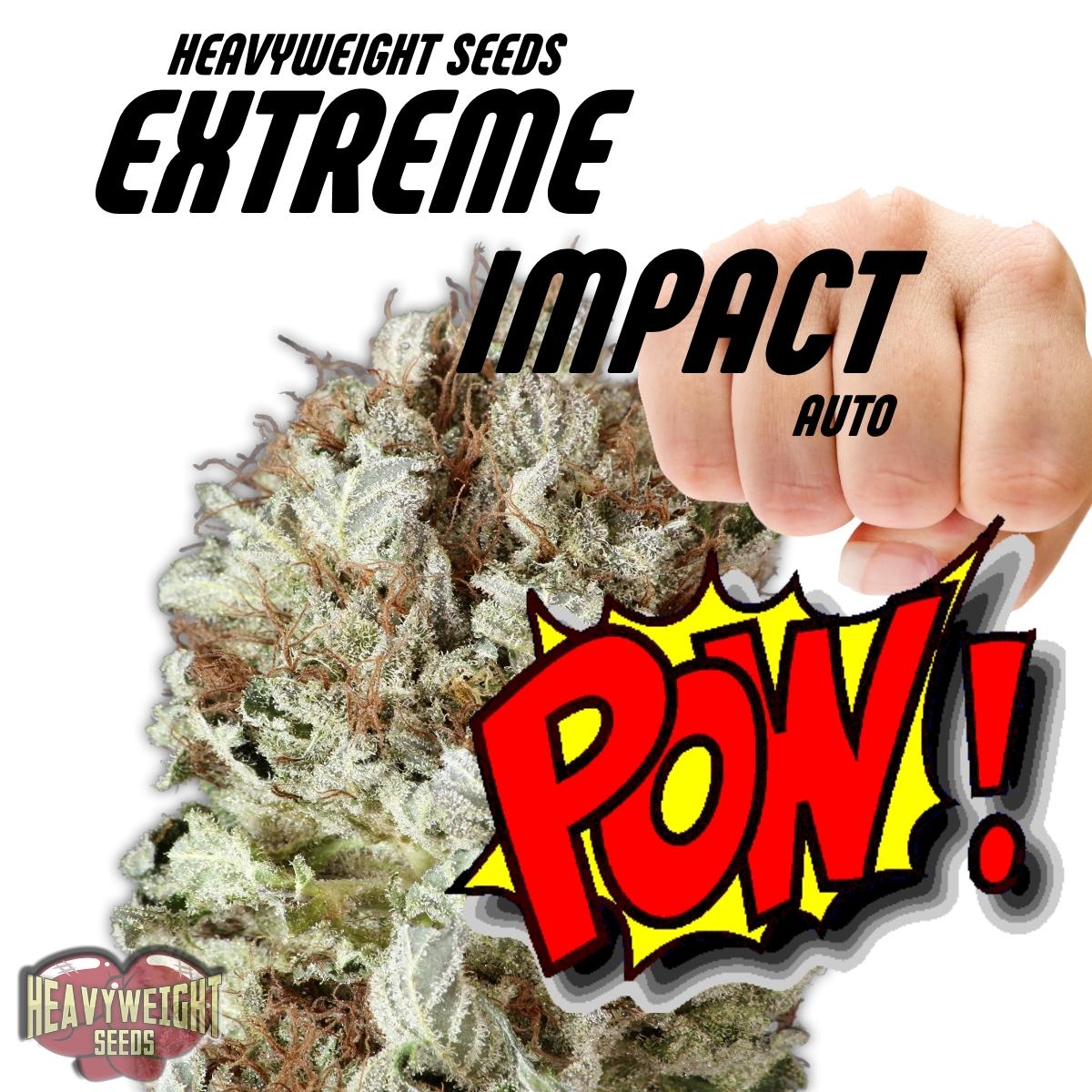 Extreme Impact Auto Feminised Seeds