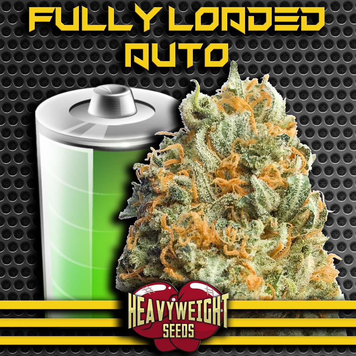 Fully Loaded Auto Feminised Seeds
