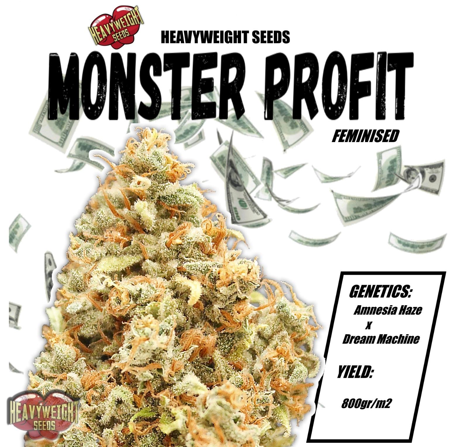 Monster Profit Feminised Seeds
