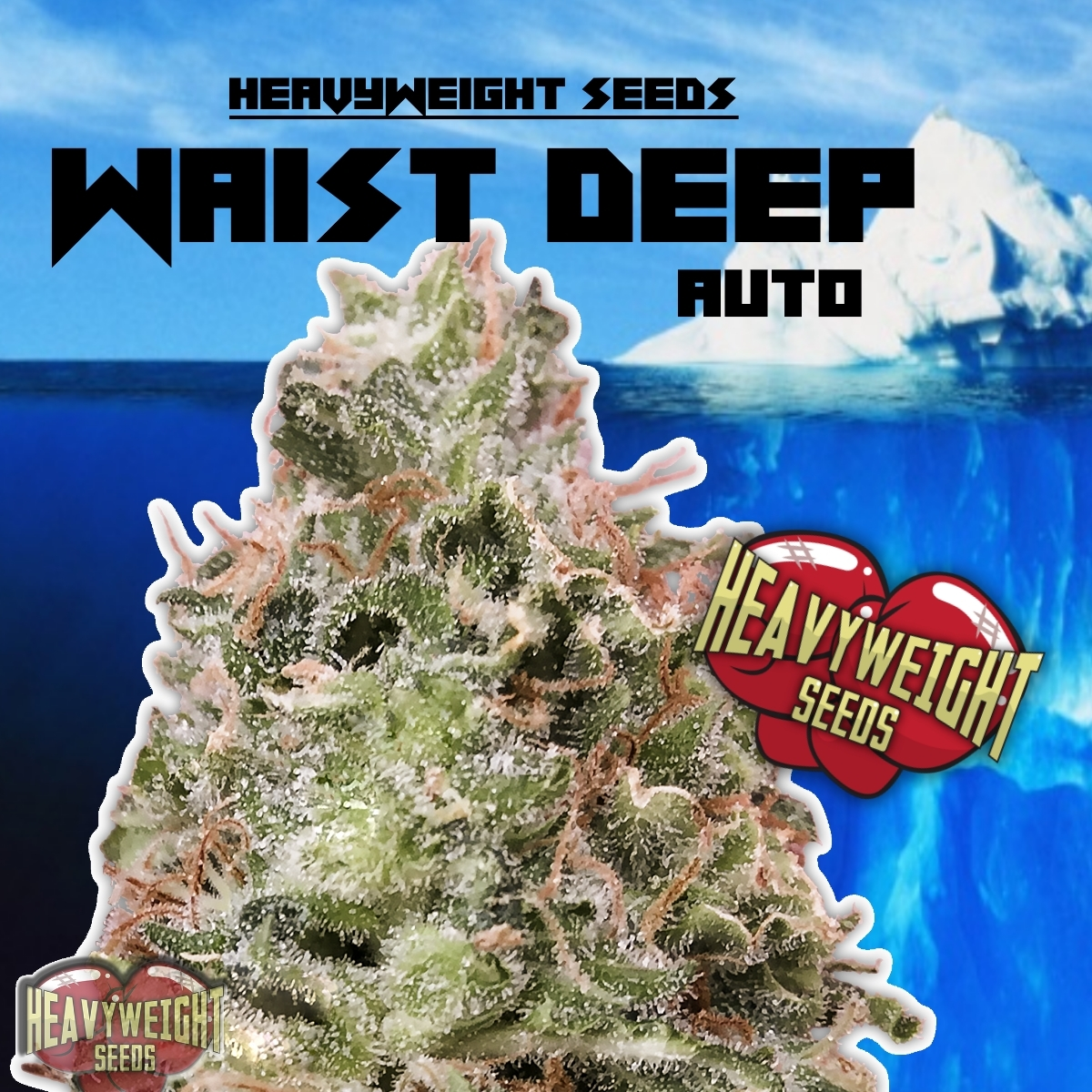 Waist Deep Auto Feminised Seeds