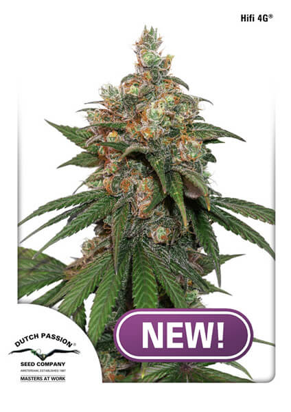 HiFi 4G Feminised Seeds