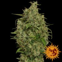 Sweet Tooth Feminised Seeds