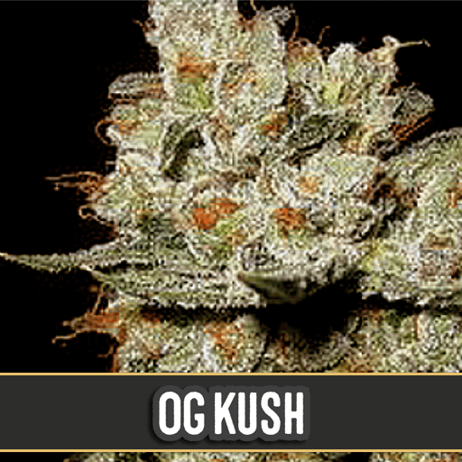 OG's Kush Feminised Seeds