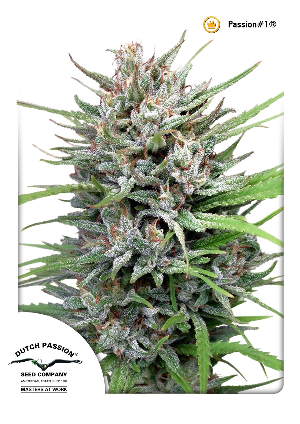 Passion #1 Regular Seeds - 10