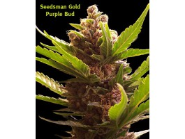 Purple Bud Regular Seeds