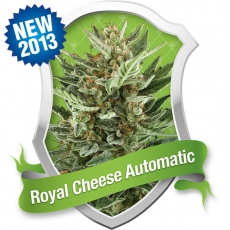 Royal Cheese Auto Feminised Seeds