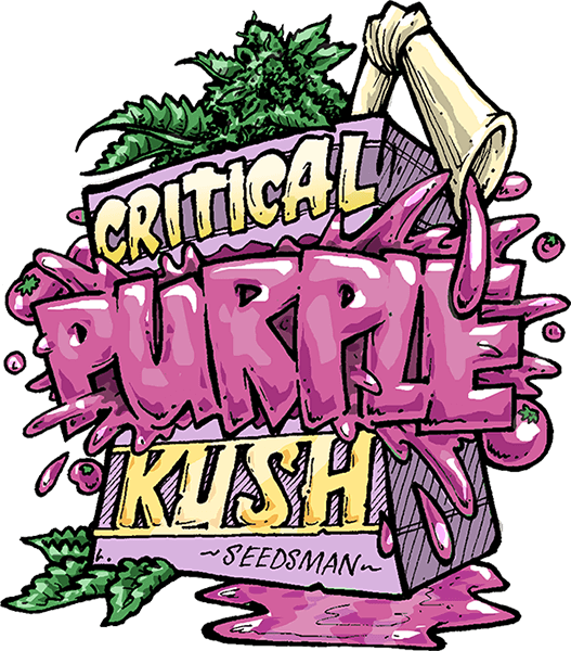 Critical Purple Kush Feminised Seeds