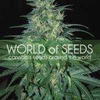S. African Kwazulu Feminised Seeds