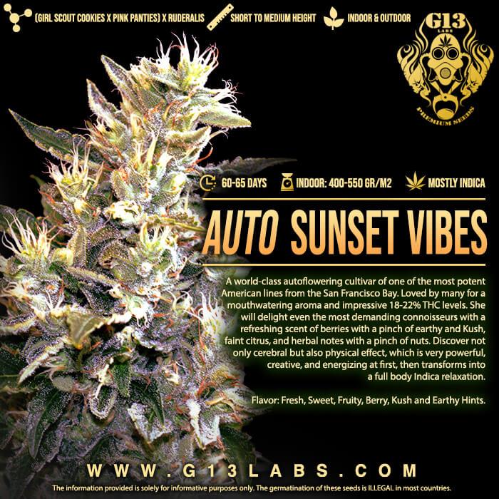 Sunset Vibes Auto Feminised Seeds - 5