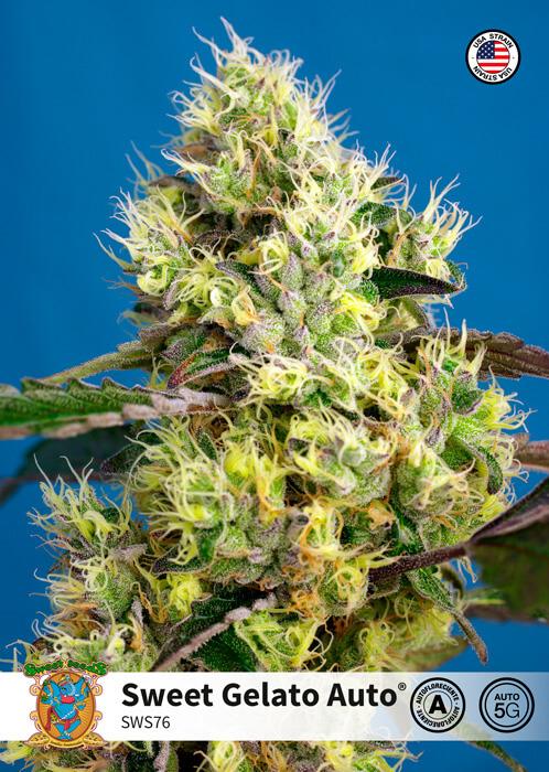 Sweet Gelato Auto Feminised Seeds
