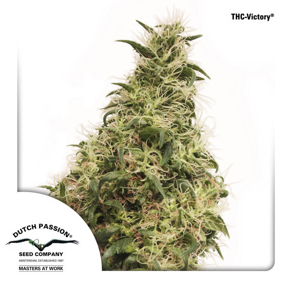 THC-Victory Feminised Seeds