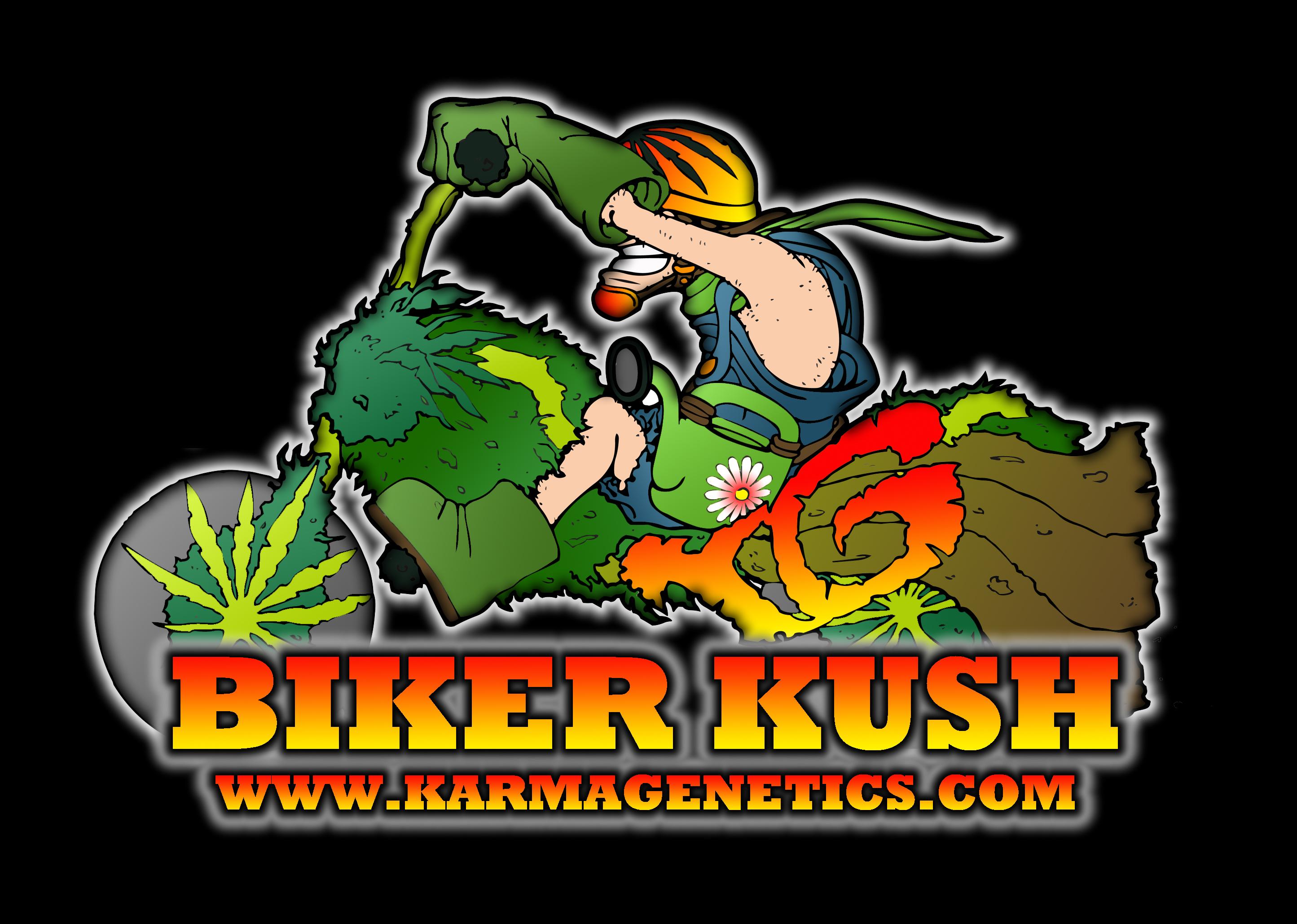 Biker Kush V2.0 Regular Seeds