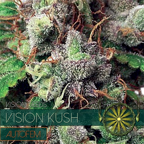 Vision Kush Auto Feminised Seeds