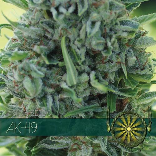 AK - 49 Feminised Seeds