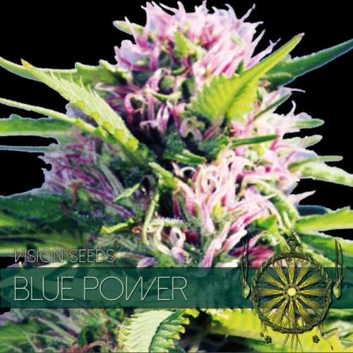 Blue Power Feminised Seeds