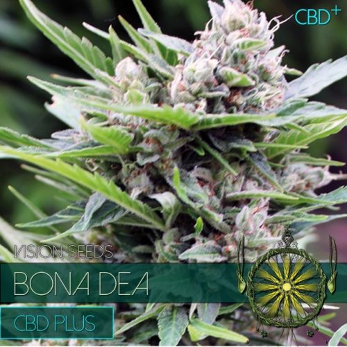Bona Dea CDB+ Feminised Seeds
