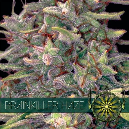 Brainkiller Haze Feminised Seeds