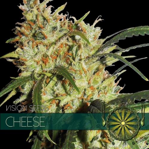 Cheese Feminised Seeds