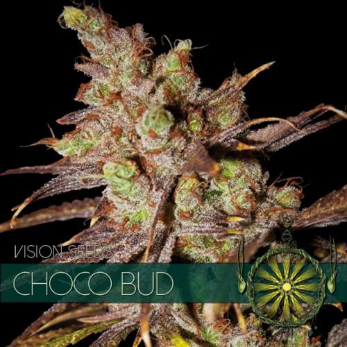 Choco Bud Feminised Seeds