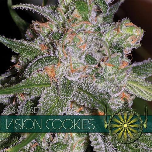 Vision Cookies Feminised Seeds