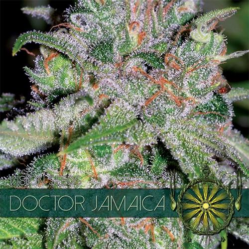 Doctor Jamaica Feminised Seeds