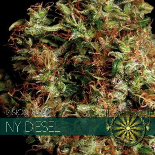 NY Diesel Feminised Seeds