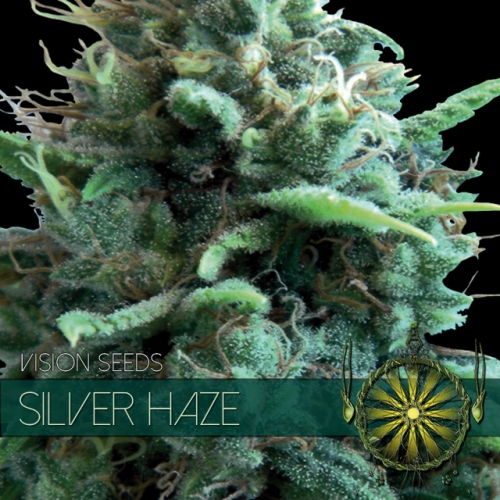 Silver Haze Feminised Seeds