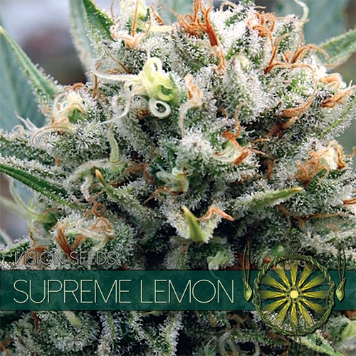 Supreme Lemon Feminised Seeds