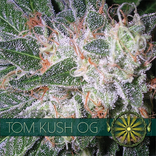 Tom Kush OG Feminised Seeds